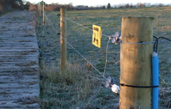 electric fencing; agricultural fencing - Post and Rail; Stock Fencing; Barbed Wire; Sheep Netting; Electric Tape and/or wire; Ménage and Arena Fencing; Wooden and Metal Field Gates; Electric Spring Gates; Stiles; Kissing Gates